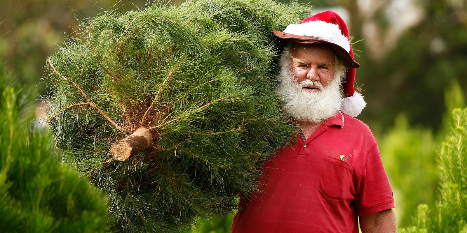 Christmas Tree Delivery And Decorating Service