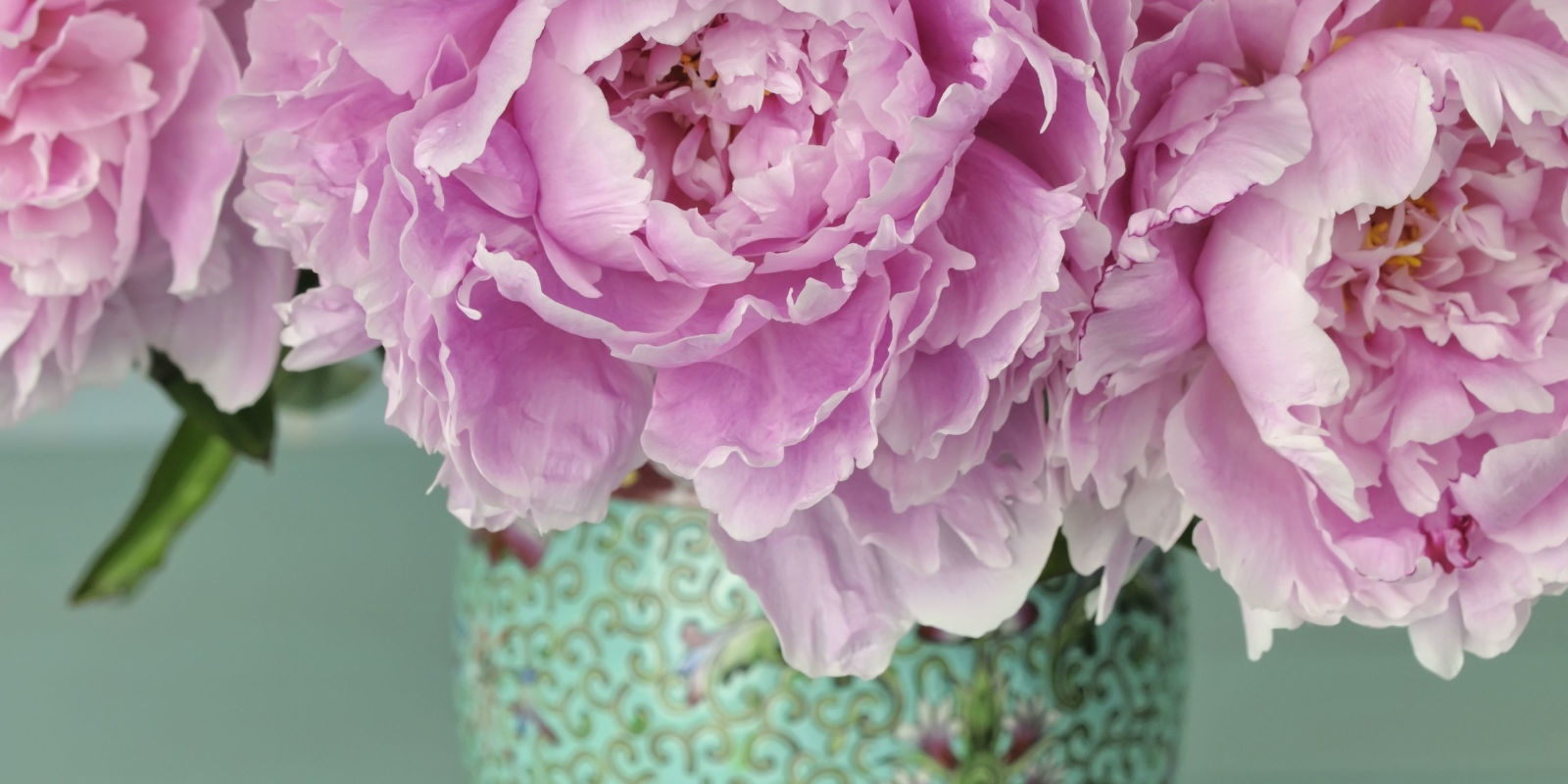 Homemade Flower Food Diy Floral Preservative Recipe