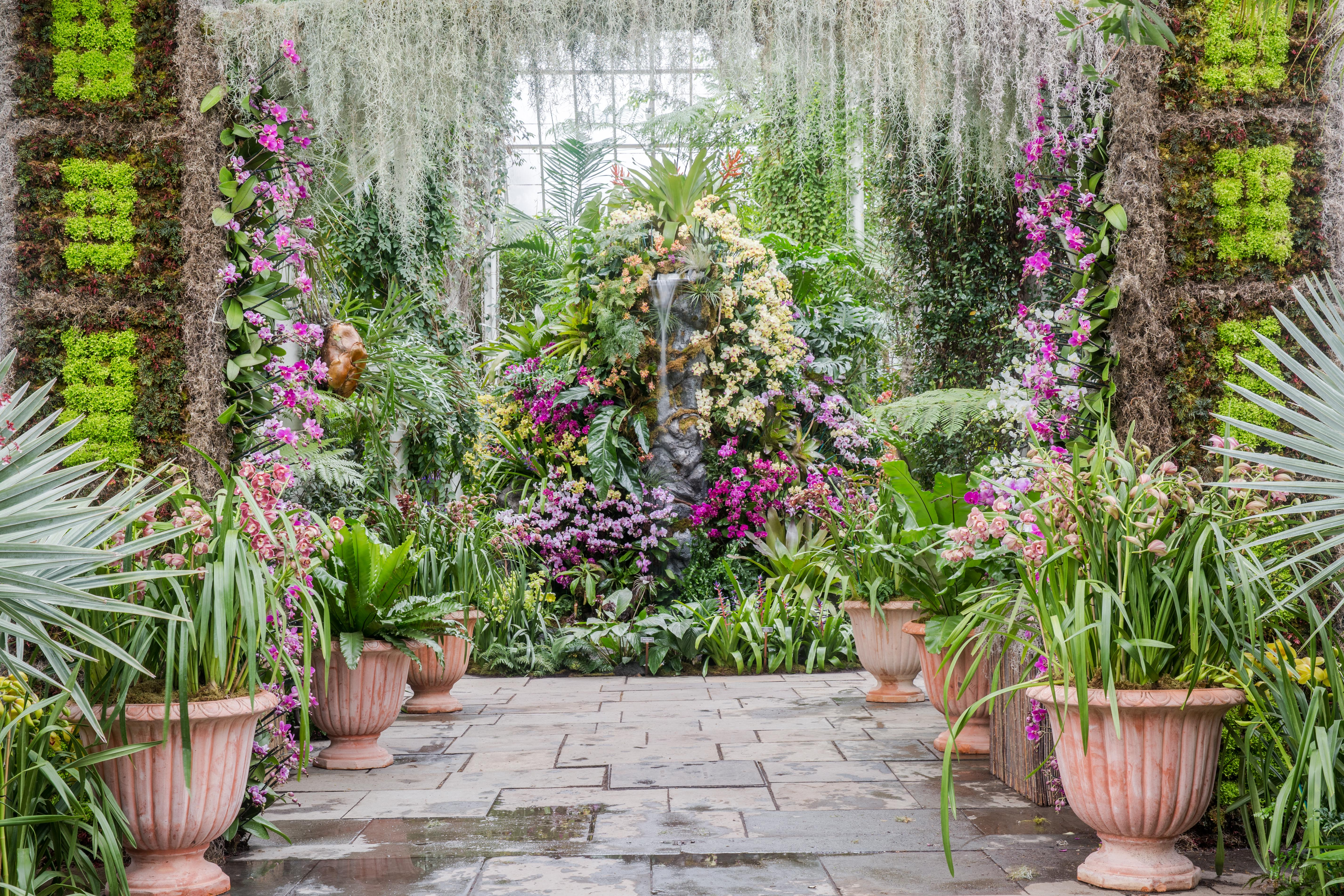 New York Botanical Garden Orchid Show Orchid Facts